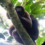 Woolly Monkey - taken by guide with scope