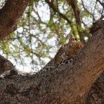 Savanna Private Game Reserve Foto
