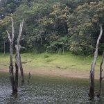 The wilderness of Periyar lake