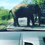 tour srilanka
