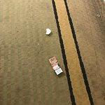Debris and soiled floor in hallway