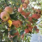 Apple Orchard Farm and Camping