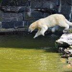 Foto de Tierpark