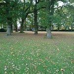 Gaywood Park woodland area