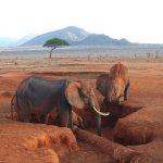 Elefanten..