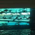 Aquarium on the main floor pool area