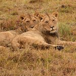 Photo of Lalibela Game Reserve
