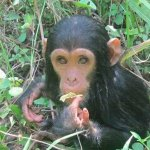 It's called the home of chimpanzees fantastic land of magic and spectacular creature on earth  M