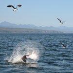 Zeehond die een rog verorbert