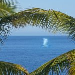 Whales at Villa del Faro!