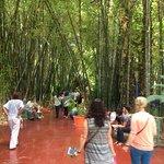 Une forêt de bambous qui ne vaut pas la Bambouseraie d'Anduse
