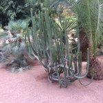 Y'avait des cactus chantait Jacques Dutronc
