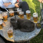 Friendly cat having a beer with biker group