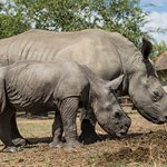 Due to this increase in the number of rhinos killed HESC expanded our current facilities.