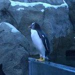 Penguin on edge of enclosure