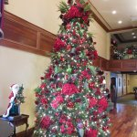 Tree in front hall.