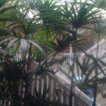 Photo de Palm Villas Port Douglas