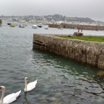 Swans on the mount