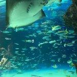 Photo of Sunshine Aquarium