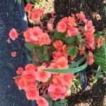 Foto de Bridge of Flowers