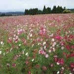 Billede af Ikoma Highlands