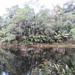 view of Mossman River