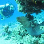 Motay eal on the Housereef