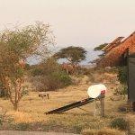 Photo of Tarangire Safari Lodge