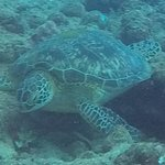 Scuba diving and seeing a turtle