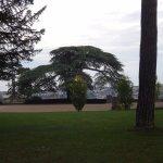 Cèdre dans le parc dominant la ville