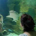 Underwater World Sea Life Mooloolaba Foto
