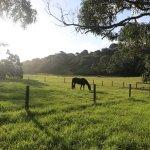 Horses next to camp ground