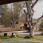 Photo of Bomani Tented Lodge