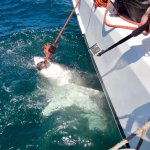 Photo of Apex Shark Expeditions