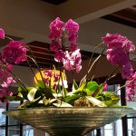 Orchids in reception