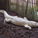 Photo de St. Augustine Alligator Farm Zoological Park