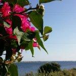 Photo de Laguna dei Fenici