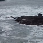 Poor picture of seals on the rocks