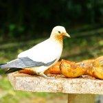 Photo of Kuala Lumpur Bird Park