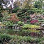 日本庭園 池と庭の様子
