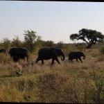 Foto de Jock Safari Lodge