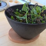 Hot cast iron bowl with magnetic wooden base (it looks like a salad but is egg and grain)