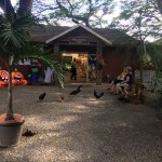 Photo de Tropical Farms Macadamia Nut Farm and Farm Tour