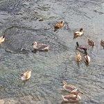 Ducks for calm environment