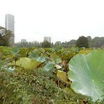 Photo of Shinobazu Pond