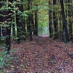 Niepołomice Forest