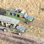 safari vehicles tracking the wild life