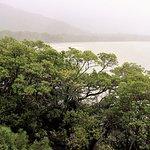 صورة فوتوغرافية لـ Daintree National Park