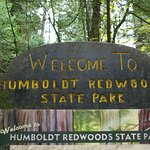 Photo of Humboldt Redwoods State Park