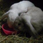 Bunnies Too!